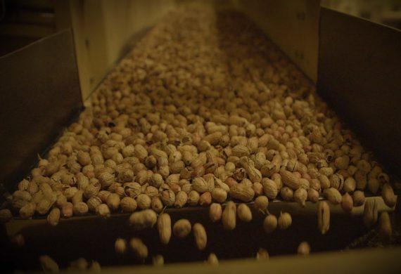 premium-peanut